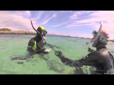 Basking Shark Scotland | Highlands and Islands Enterprise