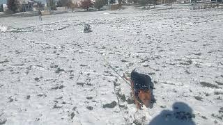 October dog sledding