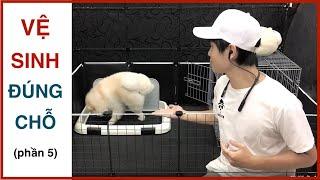 Dạy cún vệ sİnh đúng chỗ - Những sąi lầm vô tình | Cách huấn luyện chó cơ bản BoṡṡDog | D๐g training