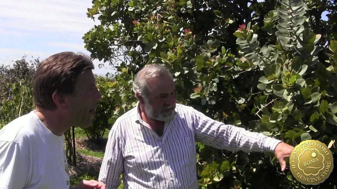 Tour dei vivai torre a milazzo il giardino dei frutti for Piante da vivaio
