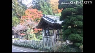 紅葉、福島、茨城、富士山(1月2日の)