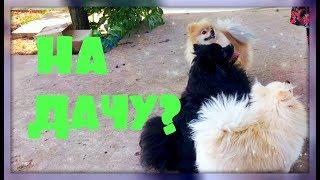 Собаки собираются на дачу! Ответы на вопросы!