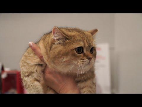 Международная выставка «Бомонд кошек – 2016»