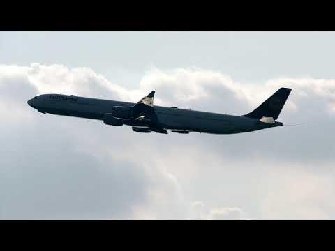 JFK Plane Spotting-Lufthansa 340 Bird Strike
