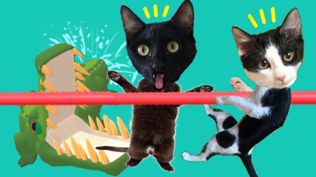 Gato jugando a simulador de zoo con gatos Luna y Estrella 2 Cocodrilo / Videojuego con gatitos