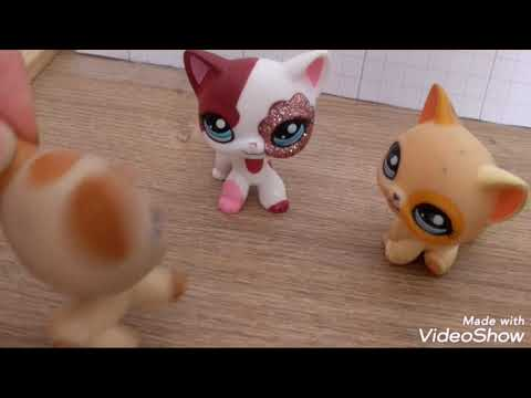 Chiens Contre Chats • LPS #1