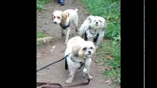 Small Dogs Group Outing To Limehouse Conservation Caving - Mississauga Meetup Groups