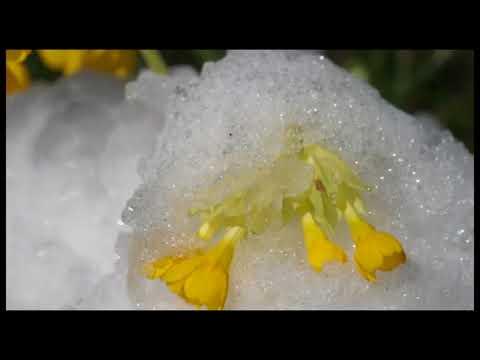Goygol National Park (full movie) ~ Национальный парк Гёйгёль