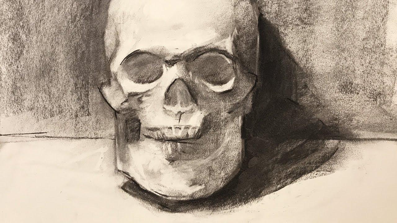 Still life 91 drawing a skull plaster cast using vine charcoal