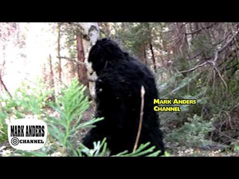 Bigfoot Yellowstone Montana Giant Sasquatch