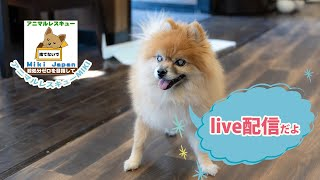 熊本、知多、周南野犬たち【live】