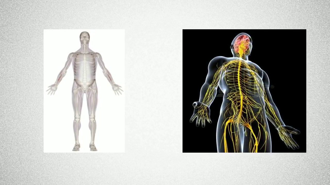 Introduction physiologie neuro musculaire - YouTube