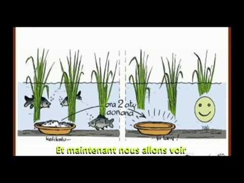 Formation scolaire à la rizipisciculture - 8 - Alimentation