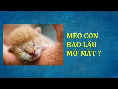 Mèo con mới sinh mới đẻ bao lâu mở mắt mấy ngày mấy tuần