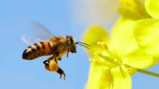 The Bees Knees - Album One - I Killed Ebola