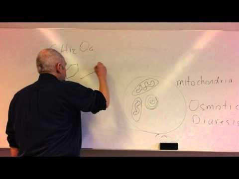 Glucose homeostasis lesson 1, Glucose control and insulin