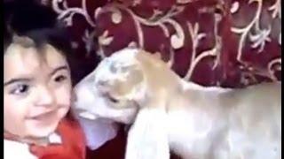تيس صغير يلحس طفله هههههههههههههههههههه