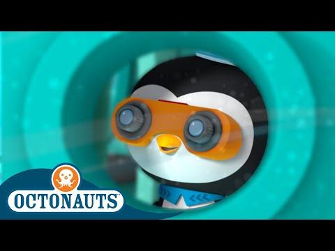 Octonauts - Ocean Camp   Cartoons for Kids   Underwater Sea Education