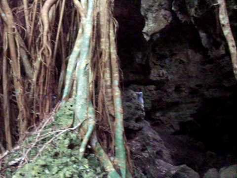 Large banyan tree and cave on 'Eua Island, Tonga. (April 2, 2010)