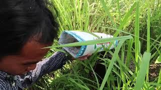 Võ Minh Phụng : Khóc Hết Nước Mắt Khi Vào Trường Học Cấp 3 Bẫy Rắn