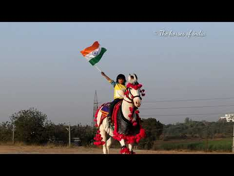 republic-day-special-video-2021---marwari-horse-of-saj-farm--the-horses-of-india