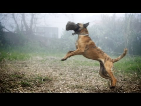 Dog Fetch Fail – Slow Motion
