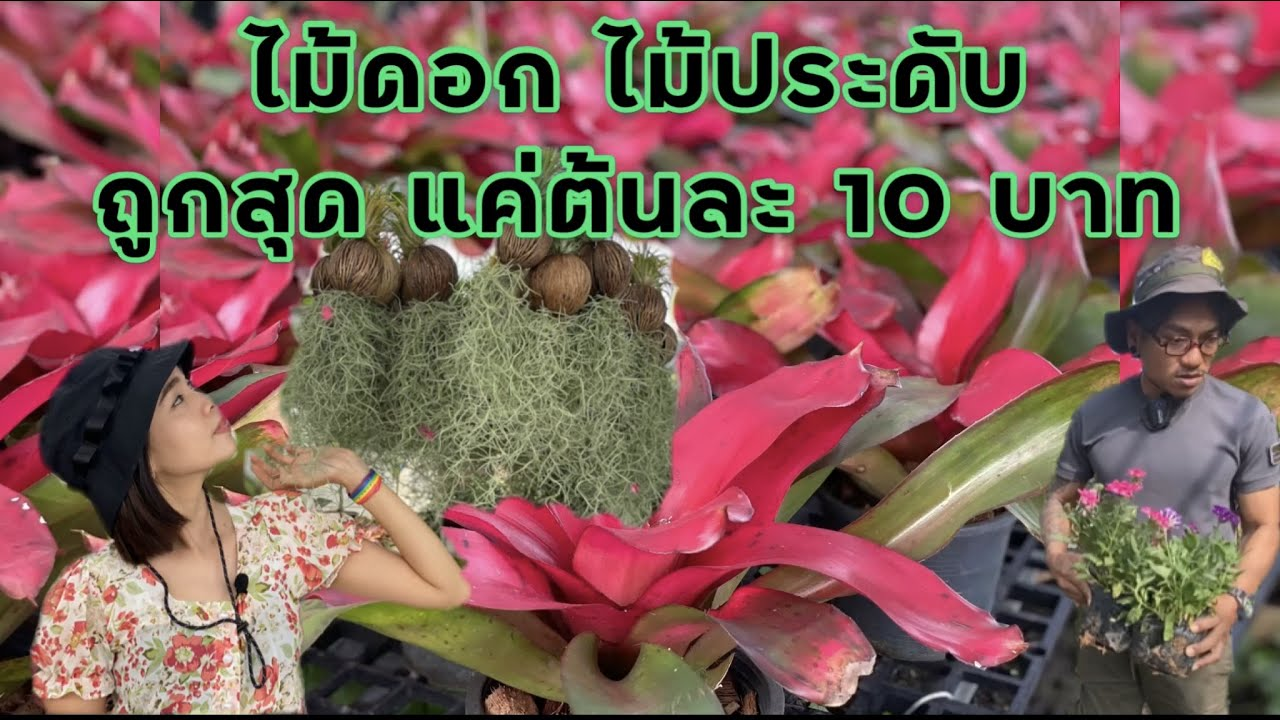 ไม้ดอก ไม้ประดับ ถูกสุดด‼️ ต้นละ 10 บาท @ ตลาดต้นไม้ คลอง15