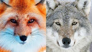 ВСТРЕЧА с ЭТИМИ животными - это ЗНАК СВЫШЕ!