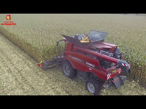 Corn threshing with Case Axial flow at van den Borne aardappelen