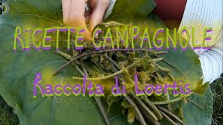 Gambar cover LOERTIS- ( asparagi selvatici ) Raccolta & Ricette campagnole