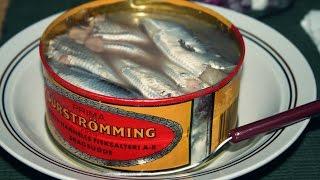 Niklaus testuje Surströmming
