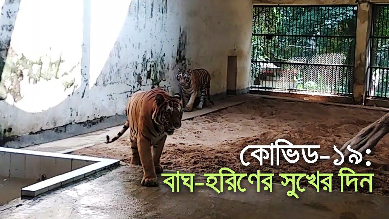 সুখের দিনে চিড়িয়াখানার প্রাণীরা | bdnews24.com