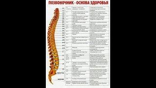 Поясница Боли в шейном и грудном отделе позвоночнике Делай это и восстанови здоровье позвоночника