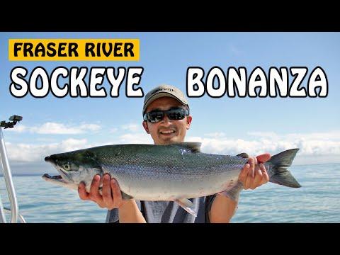 Sockeye Salmon Bonanza | Fishing With Rod