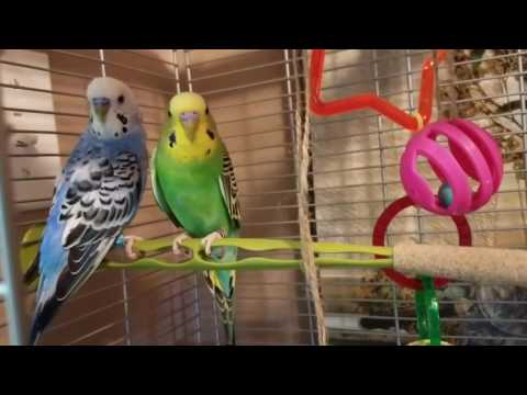 HOW TO MAKE CHEAP BIRD TOYS  / DOLLAR TREE SUPPLIES