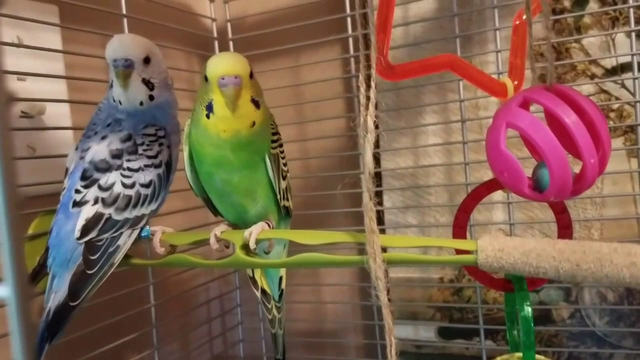 Discount Bird Toys : How to make cheap bird toys dollar tree supplies youtube
