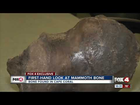 Mammoth Bones Found By Construction Workers In Florida (Aug. 14, 2018)
