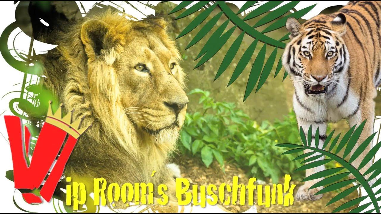 Wer Wird Dschungelkönig