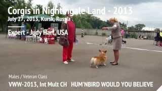 Corgis In Nightingale Land - 2013 / Males / Veteran Class