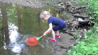Clara catching water bugs at Mill Creek in Derwood May 2015