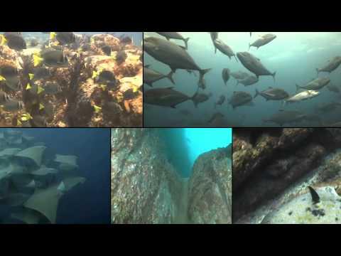 manta-scuba-diving---cabo-san-lucas