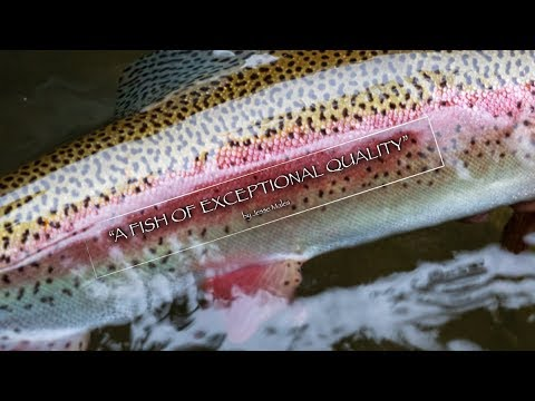 A Fish Of Exceptional Quality - Trout Fishing Costa Rica