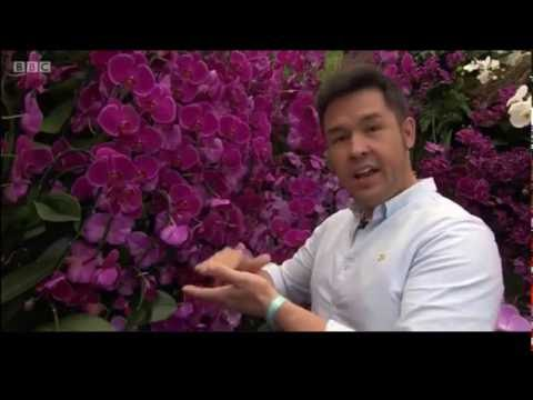 James Wong filming at our Love Orchids exhibit at RHS Chelsea