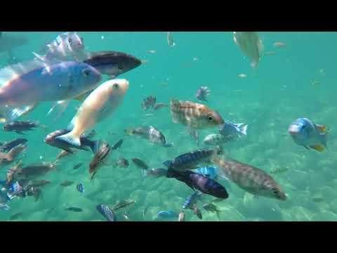 Lake Malawi - Real life aquarium
