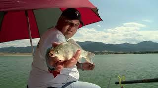 Лятото на каракудите на яз. Леново - част 2 / Carassius fishing in summer - part 2
