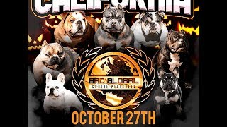 AMERICAN BULLY DOG SHOW OCT 27TH SACRAMENTO,CA 2 BRC GLOBAL SHOWS AND 1 FUN SHOW