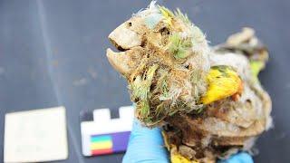 Vor 3000 Jahren: Mumifizierte Papageien offenbaren düstere Seite unserer Geschichte
