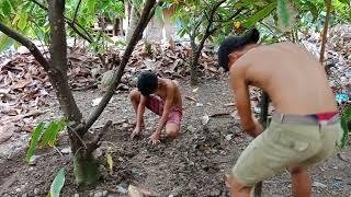 Cacao Farm:  Techniques