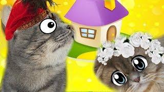 Новый дом для кошки.  КОТ МАКС В ЗАСАДЕ. Мир глазами котика