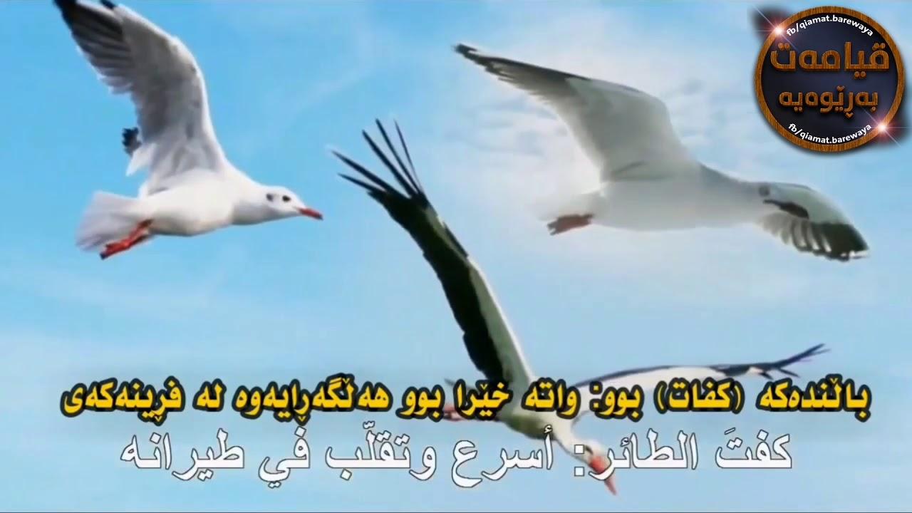 باشە ئەگەر  محمد ﷺ پەیامبەری خوا نەبێت چۆن ئەمەی زانیوە ... ؟! #پەیجی قیامەت بەڕێوەیە qiamat